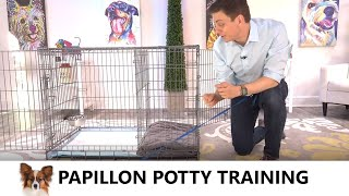 Papillon Potty Training from WorldFamous Dog Trainer Zak George  Potty Train a Papillon Puppy