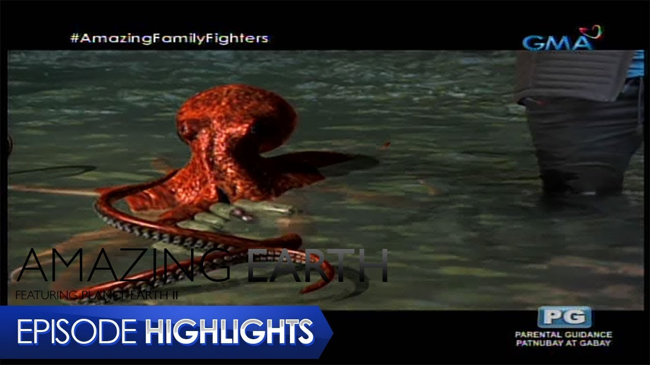 Amazing Earth: The largest Octopus