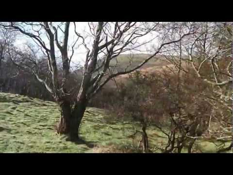 A Walk to Abergwyngregyn (Aber Falls) North Wales