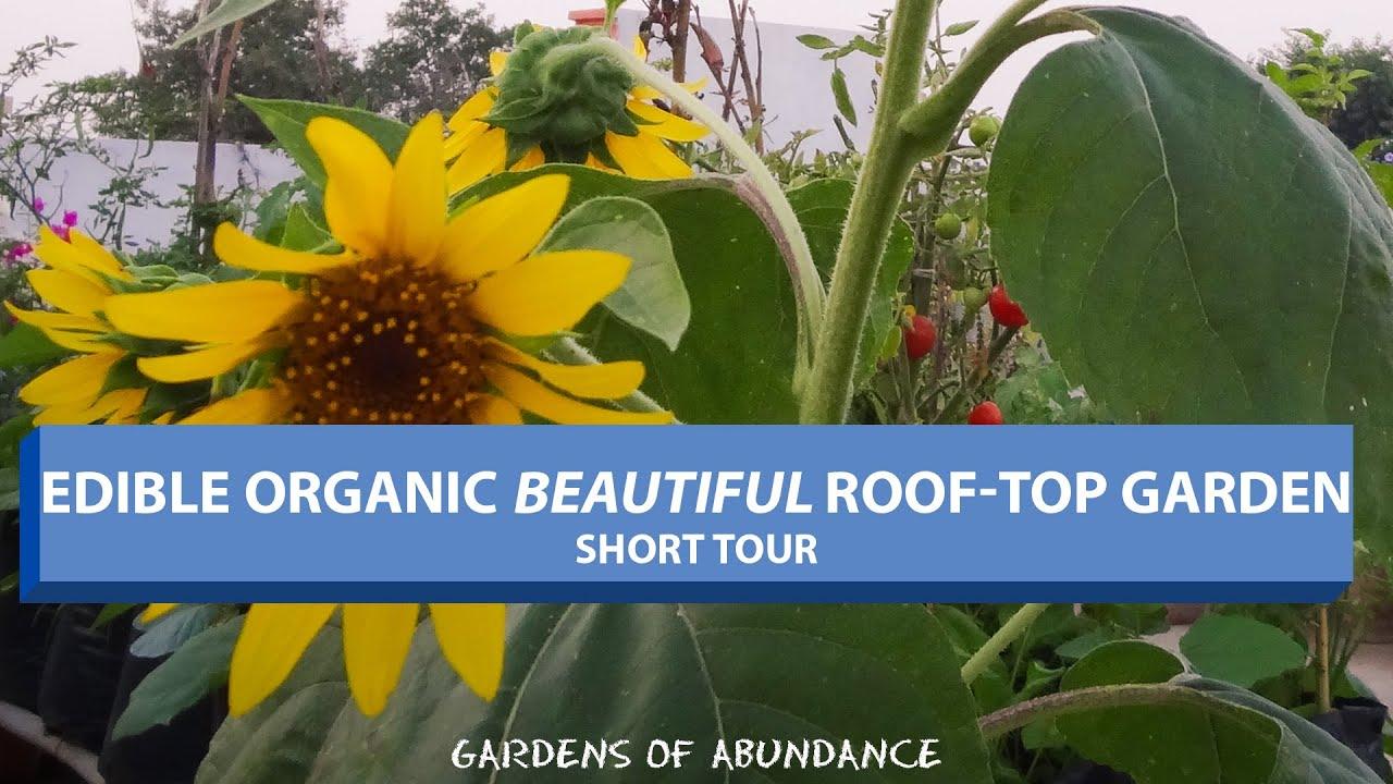 Kitchen Garden In India Organic Edible Beautiful Rooftop Garden Hyderabad India Youtube