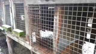 Z miłości do r(k)asy - interwencja w hodowli psów