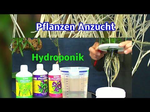 Exotische Pflanzen In Der Hydroponik Anzucht Bietet Sehr Viele Vorteile Von Detlef Römisch