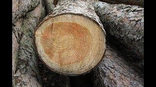 Planet Wissen - Holz