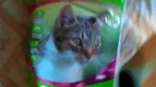 Веганский корм для кошек Benevo