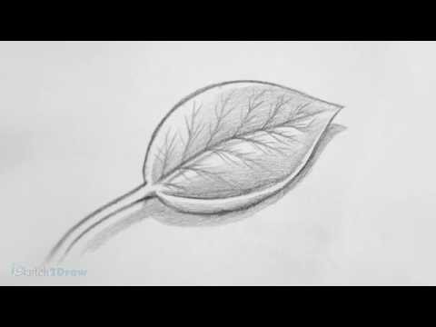 how-to-draw-&-shade-a-leaf-(sketching-practice-tutorial)