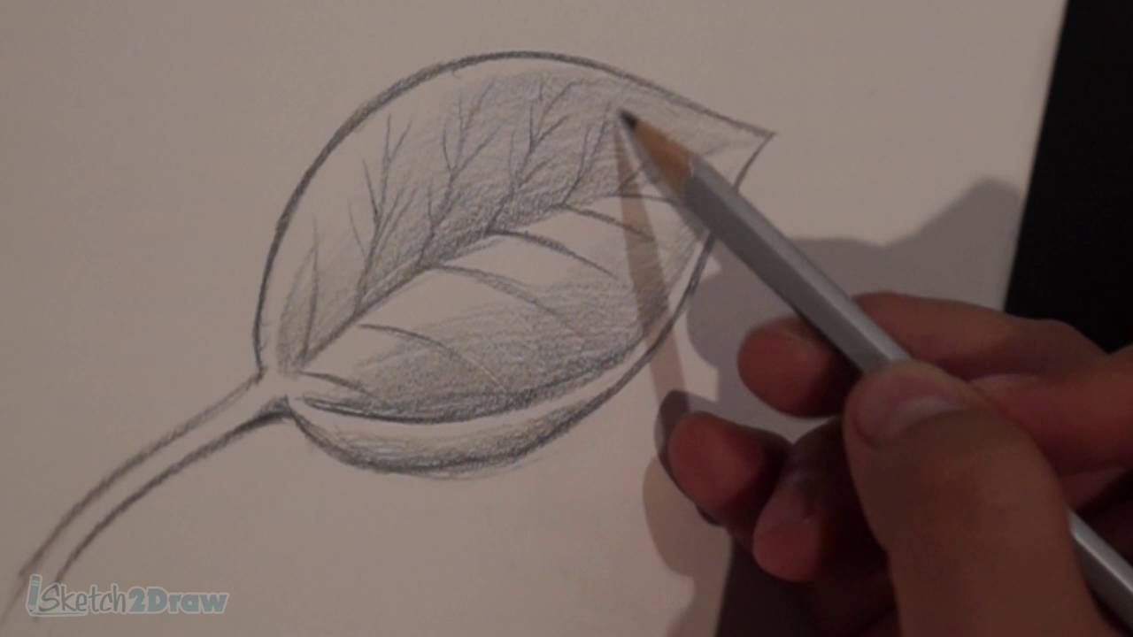 How to draw shade a leaf sketching practice tutorial