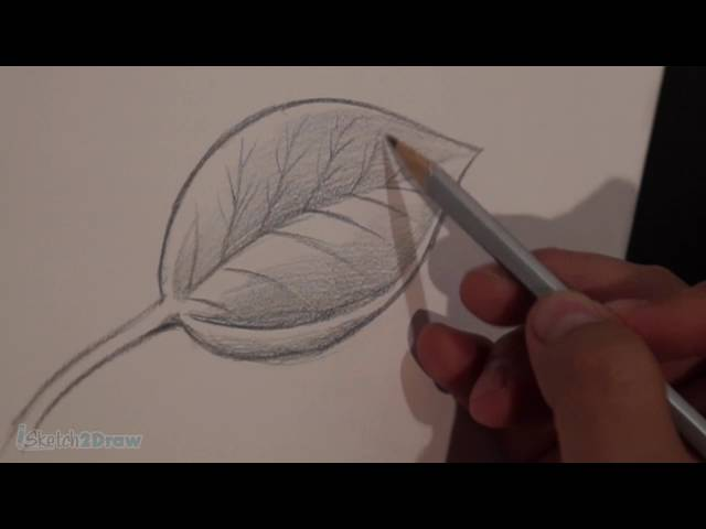 How to Draw & Shade a Leaf (Sketching Practice Tutorial)