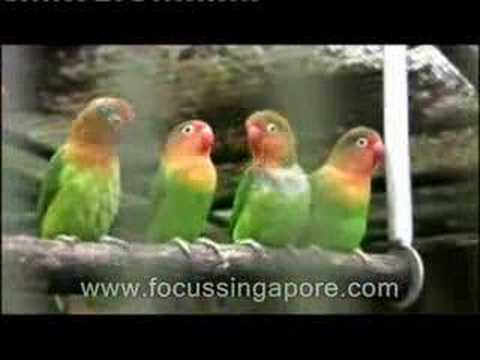 Jurong Bird Park - enthralling feathered species planet