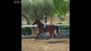 Escuela de equitación DELVIC - ELCHE