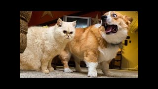 Funny cats and dogs - Try not to laugh or grin while watching animals #1