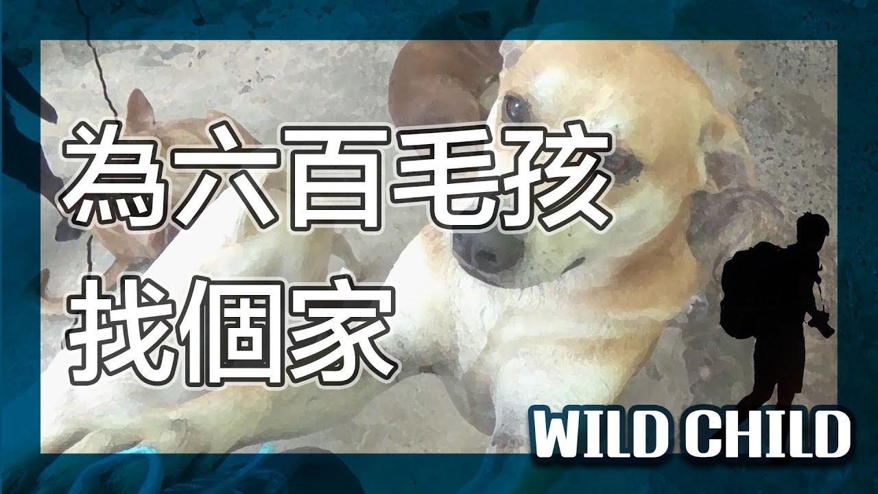 【 台北之旅-故事台北】幫六百隻浪浪找個家的故事|流浪動物|張媽媽狗園|流浪貓流浪狗|Taipei story|野孩子TV