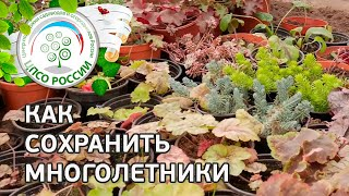 Цветы многолетники купили осенью, что с ними делать? Сажать или сохранить до весны?