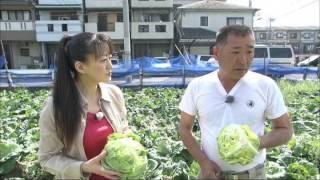 KBS京都テレビ 「あぐり京都」 春きゃべつ 平岡さん(京都市) 2017年4月放送