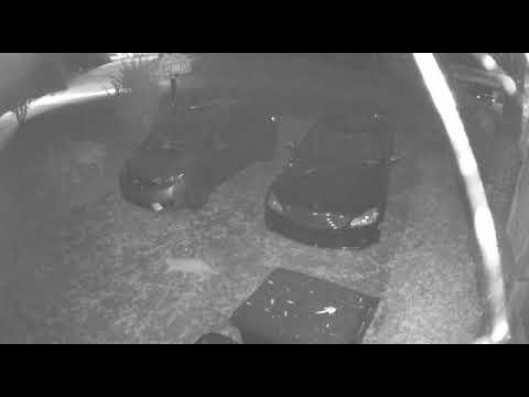 Neighborhood cat spraying our car- video 2 (12/1/2017)