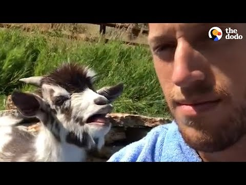 The KiddChris Show - Guy Argues With A Goat