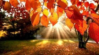 Play In Autumn Gold