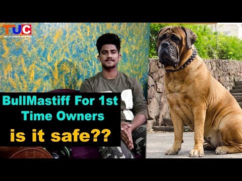 BULLMASTIFF For 1st Time Owner : is it safe?? : TUC