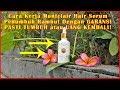 Cara Kerja Montclair Hair Serum Penumbuh Rambut Garansi Pasti Tumbuh atau Uang Kembali