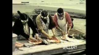 Outdoor Fish Cookery: Makah Indians, Neah Bay, 1959