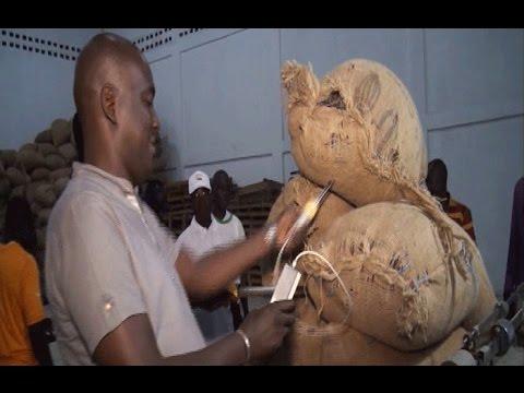 Côte d'Ivoire: Journée nationale du cacao et du chocolat célébrée à Soubré