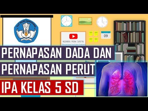 Pernapasan Dada Dan Pernapasan Perut Ipa Kelas 5 Sd Youtube