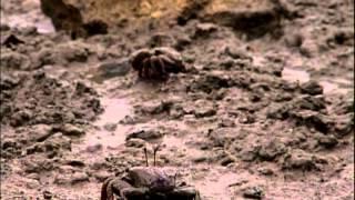 Aventura Selvagem (06/10/13) - Especial: Faces da Paraíba - Parte 1