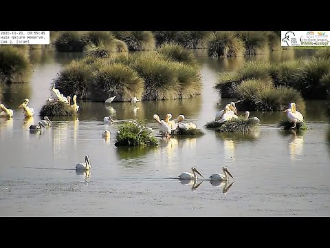 Hula Nature Reserve Cam2|Israel Nature & Parks Authority|The Charter Group Of Wildlife Ecology