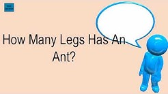 How Many Legs Has An Ant?