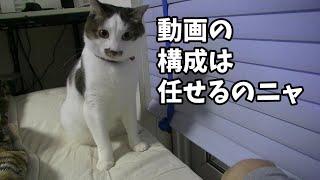 色々と良く分かってる猫