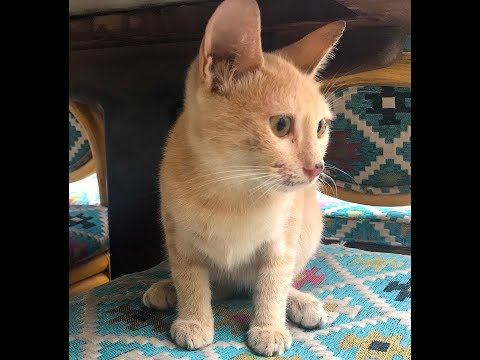Street Cats of Hurghada, Egypt: with THE DEE'S