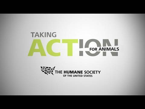 2010 Taking Action For Animals Conference