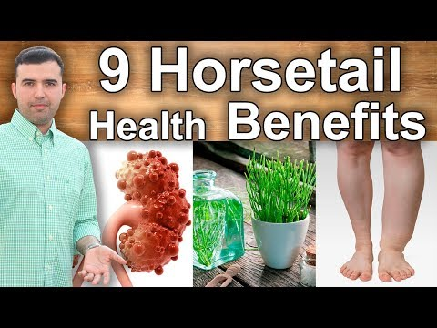 9 Health Benefits Of Horsetail - Incredible Properties For Your Kidneys, Liver, Diabetes And More