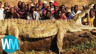 Download Top 10 Most Insanely COLOSSAL Animals of All Time Mp3 and Videos