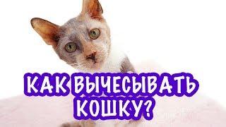 Как вычесывать кошку с короткой шерстью