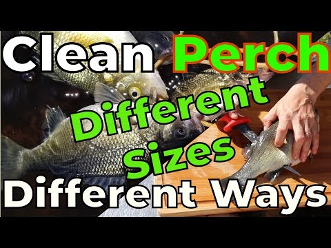 How to Clean White Perch :: Fast and Easy