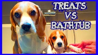 Cute Dogs just don't want to bath!