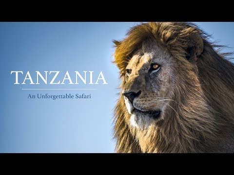 Unforgettable Safari Adventure on the Serengeti in  Tanzania