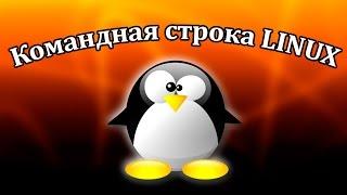Команды терминала Linux. Урок 1. Основа работы с файлами