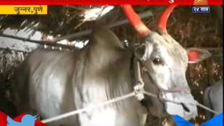 Repeat youtube video Junnar : Pune Roof For Animal