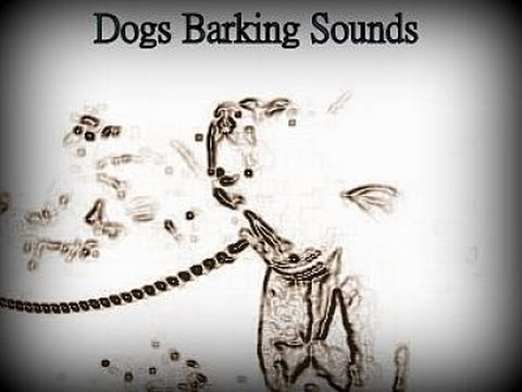 woof,-ruff,-bow-wow---who-likes-dogs-barking-sounds?