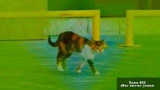 Опять коты на саммите в Анталии