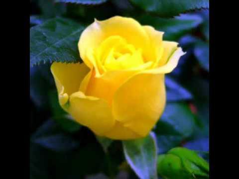 Flores Y Rosas Hermosas Youtube
