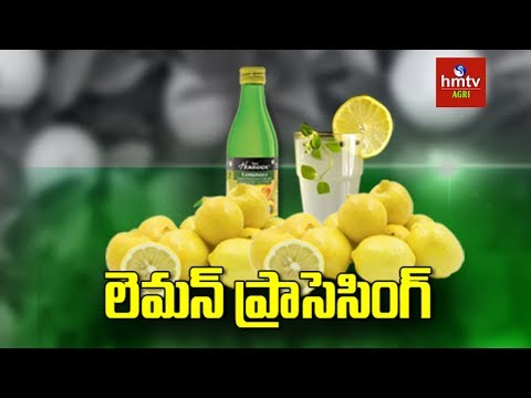 Lemon Processing Guide By Mynampati Sreenivasa Rao | Food Processing | hmtv Agri