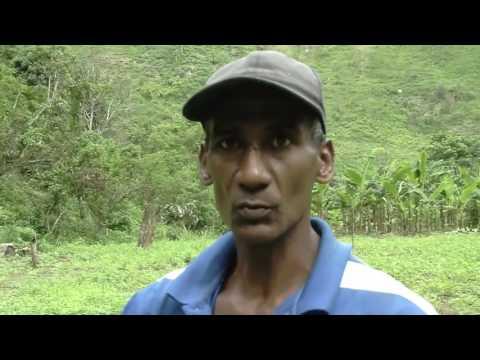 Cosecha de Caraotas en Araira Edo. Miranda Solo el pueblo salva al pueblo