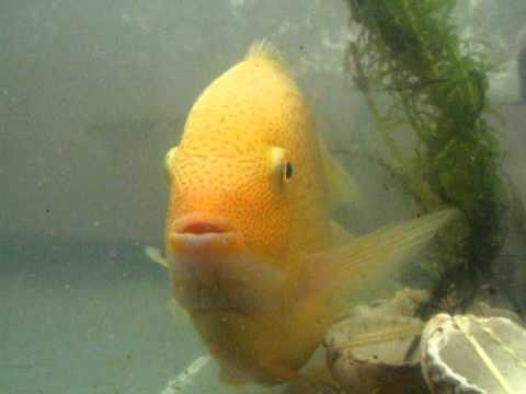 Смотреть клип Fish Dancing онлайн бесплатно в качестве