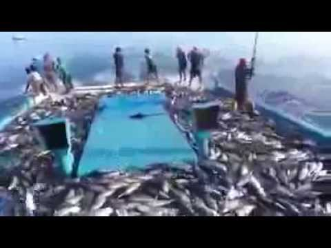 Cận cảnh câu cá ngừ trên biển
