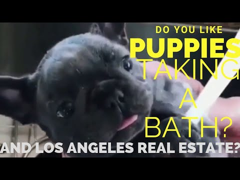 Do you like Los Angeles Real estate and puppies taking a bath?