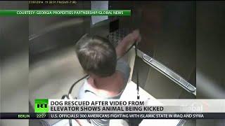 Millionaire caught on elevator camera abusing puppy