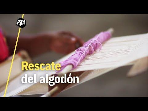 El rescate del algodón en Papantla, Veracruz