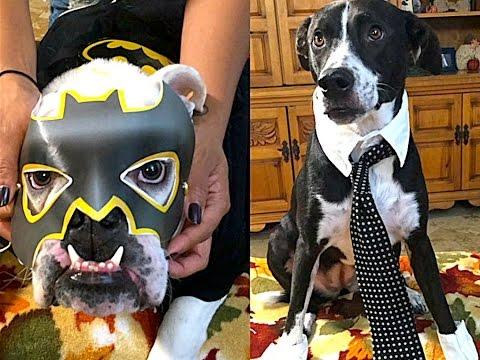 Fab Or Fail: Testing 3 DIY Halloween Dog Costumes